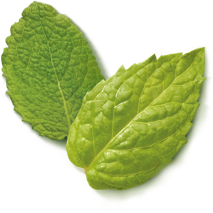 green-tea-peppermint-ingredient-2.png